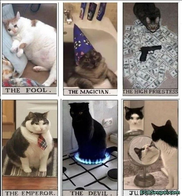 The Best One Is Ecosenpai In 2021 Animal Memes Clean Animal Memes Funny Animal Memes