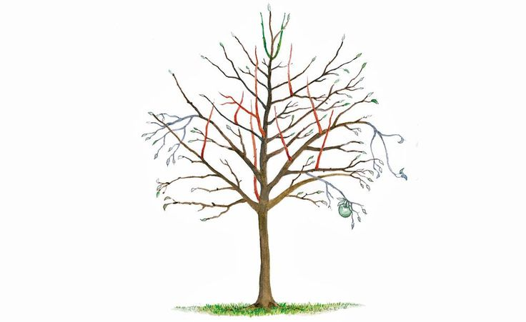 Als Erhaltungsschnitt bezeichnet man den jährlichen Winterschnitt bei älteren Obstbäumen