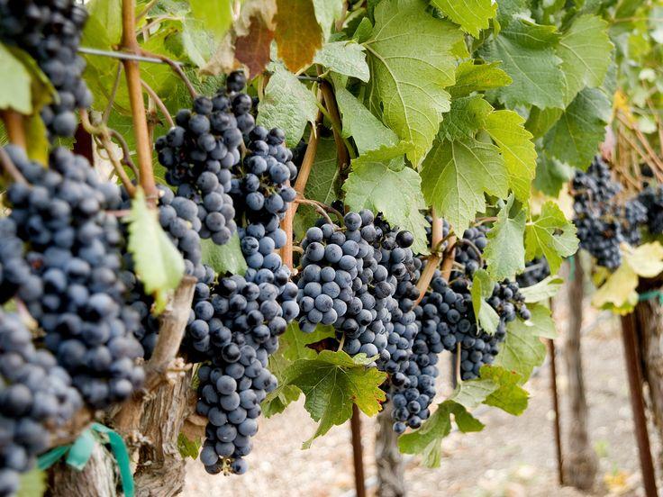 The Top Six Wine Varietals : Recipes and Cooking : Food Network - FoodNetwork.com
