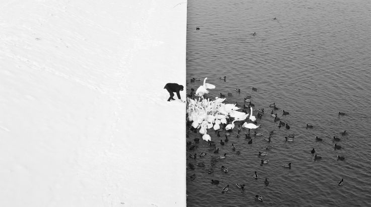 3. A man who feeds swans in the snow. These PIctures Are Not Photoshopped