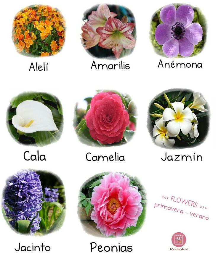 221 best images about flores on pinterest delphiniums - Plantas de temporada primavera ...