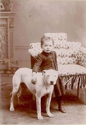 1880 Bull Terrier