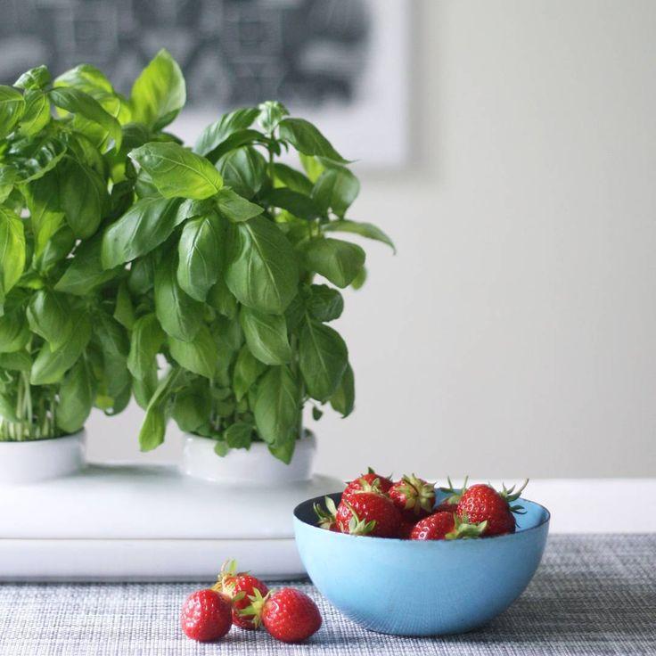 Dvojdílná porcelánová nádoba na dva květináče se zavlažovací miskou. Samozavlažovací květináč velmi jednoduchý a efektivní.