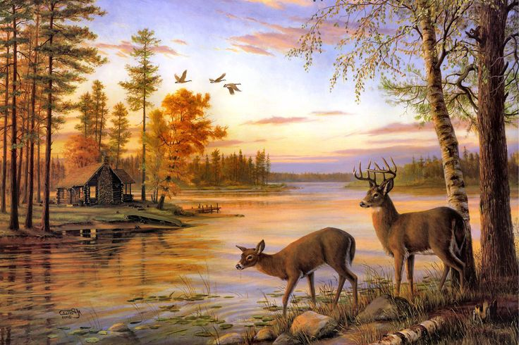 25 Best Ideas About Deer Wallpaper On Pinterest: Two Deer Drink Water On The River When Sunset