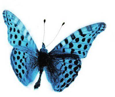 [sommerfugl.jpg]