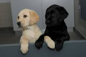 Guide Dogs For The Blind Association Leamington Spa