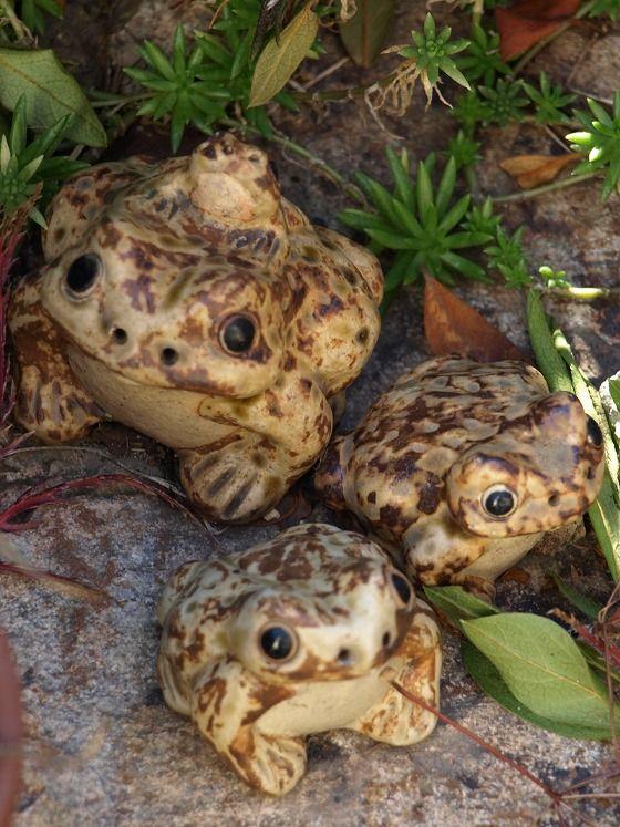 寒い日、庭のカエル君たち - 大台ケ原の30年 - Yahoo!ブログ