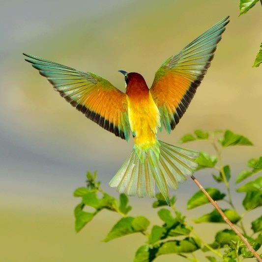 Colorful hummingbirds flying - photo#53