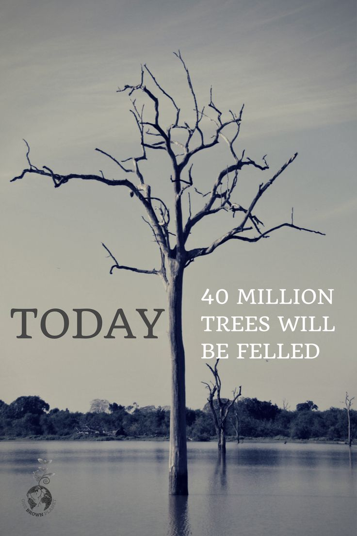 Today over 40 million trees will be felled to provide us with products. What are you doing to reduce this? www.onebrownplanet.com