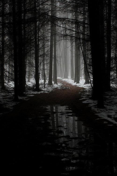 Cold   dark forest    ...