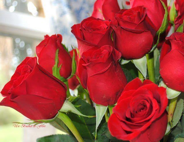 amo las rosas me brindan calides , me gusta mirarlas