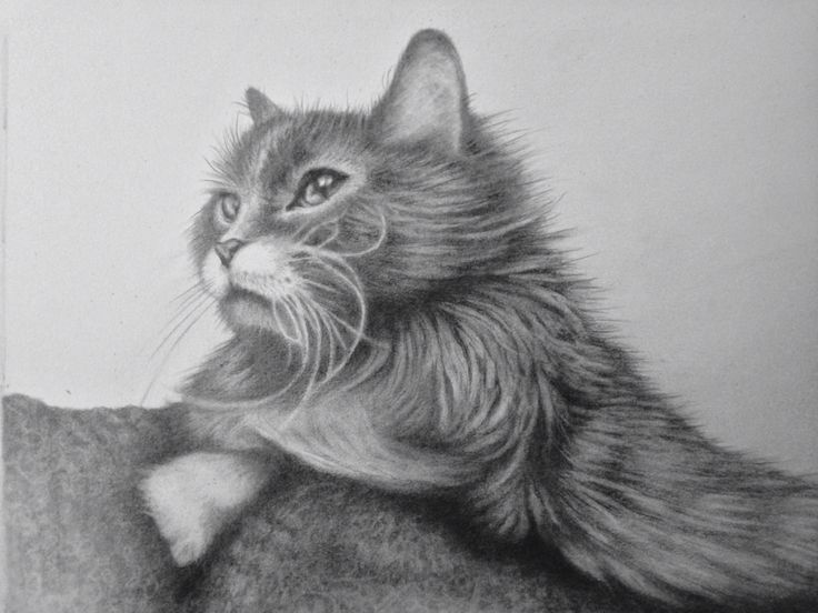 Cat portrait in Graphite 8x10