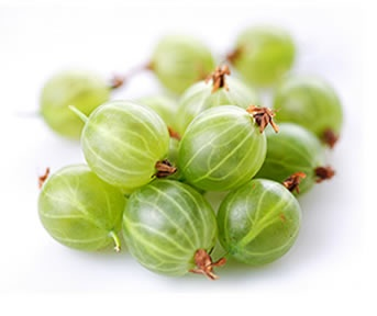 Agrest poprawia i przyspiesza metabolizm, a dzięki swoim właściwościom moczopędnym oczyszcza organizm ze szkodliwych produktów przemiany materii. Ogólnie zatem agrest dobrze wpływa na apetyt i procesy trawienne, zwiększając wydzielanie żółci.