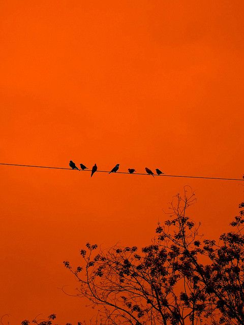 The Birds. *dun dun dunnnn*   Flickr – Condivisione di foto!