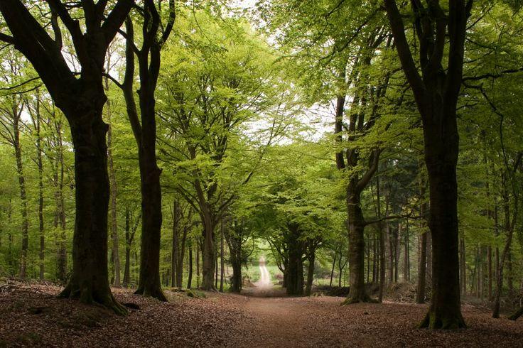 """Wandelgebied """"Utrechtse heuvelrug"""" en andere leuke losloopgebieden voor je hond"""