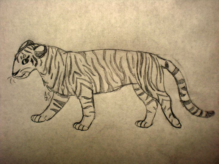 malayan tiger drawing - photo #15