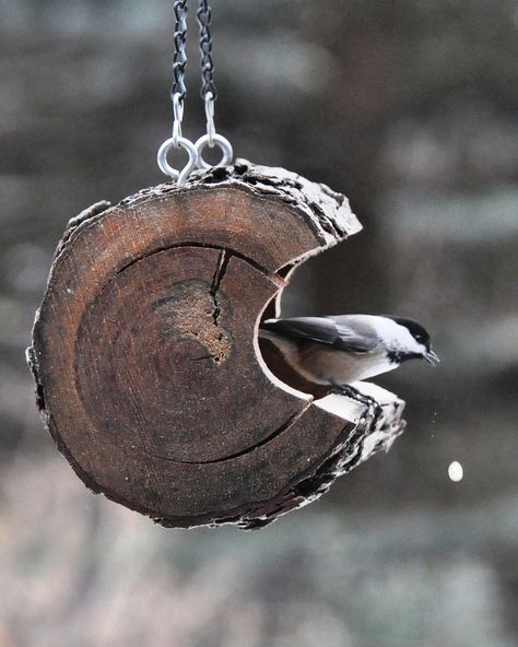 Great reuse of a section of tree trunk. Just hollow it out by carefully using a chainsaw and finish it up with a chisel. Add the eye hook then hang from tree and fill with your birdseed of choice......enjoy..!!