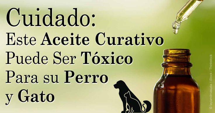 El uso del aceite del árbol de té es popular en los humanos, pero podría ser potencialmente toxico en gatos y perros. http://mascotas.mercola.com/sitios/mascotas/archivo/2014/09/02/aceite-de-arbol-de-te-para-perros.aspx