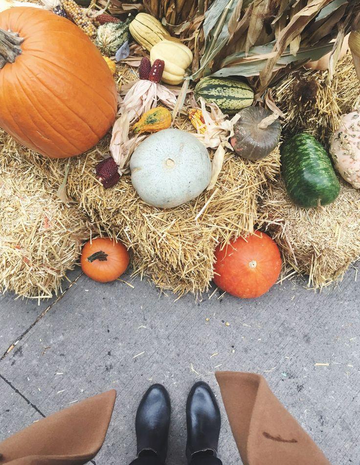Die Bucket List für den Herbst mit alternativen Unternehmungen in Berlin und Umgebung