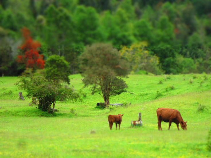 Rancho Vaitea Riñinahue- Sector Los Venados