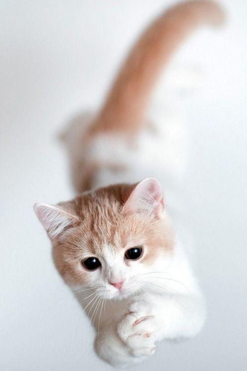 Pin By Alexa Grey On Cute Cats Cute Cat Wallpaper Kitten