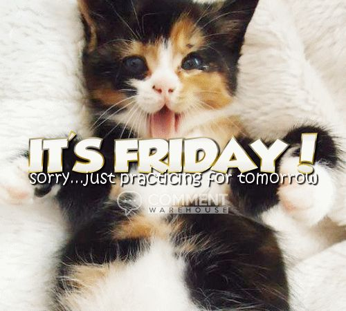It's Friday sorry just practicing for tomorrow | Thursday Graphics Cute Graphics Kitten images pics comments Thursday greetings funny - commentwarehouse.com