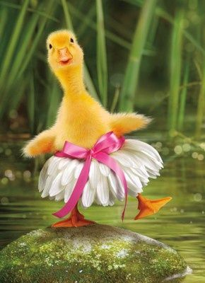 17 Best Images About Ducks In A Row On Pinterest