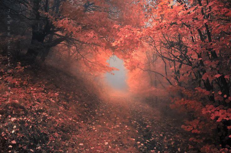 Dream-Like Autumn Forests By Czech Photographer Janek Sedlář - Album on Imgur