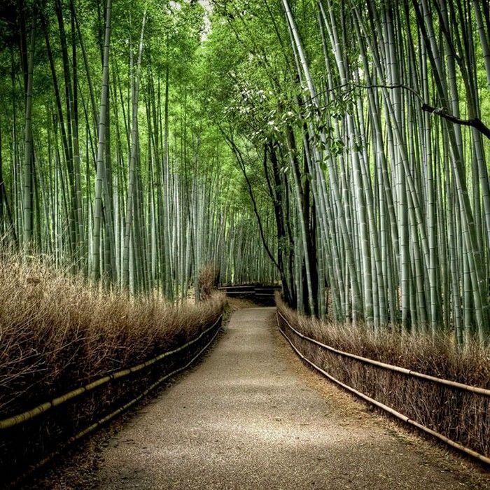 Бамбуковая роща Сагано (Sagano bamboo grove), Киото, Япония