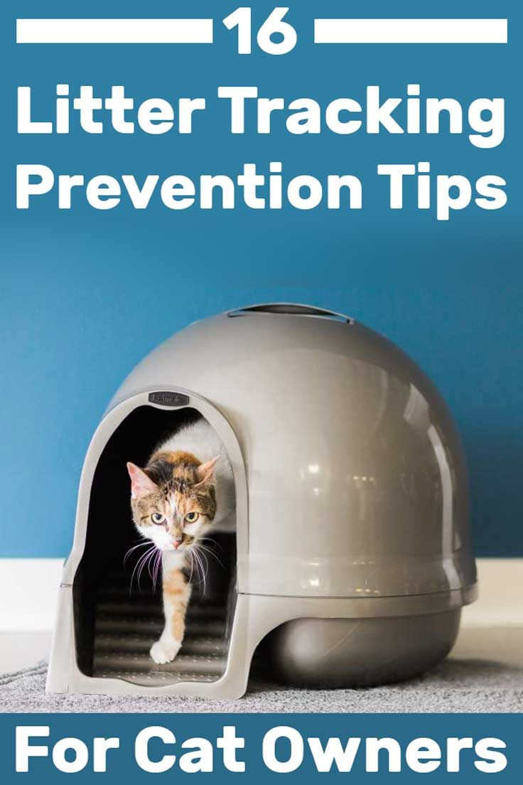 16 Litter Tracking Prevention Tips For Cat Owners Litter Tracking Best Cat Litter Cat Litter