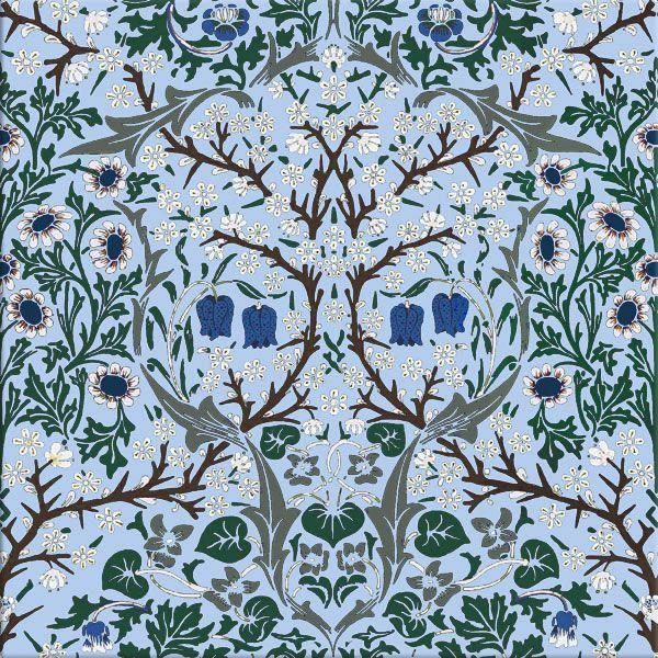 Blue-eyed Blackthorn, spring colors, blue background
