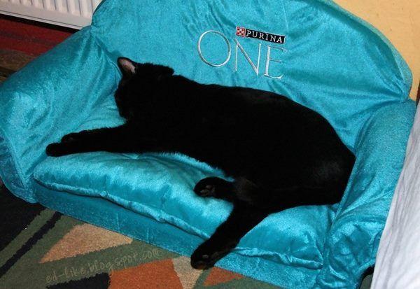 Kicia śpi, aż się dziwię, bo po karmie Purina One ma tyle energii :) #kampaniapurinaone https://www.facebook.com/photo.php?fbid=1526421580917217&set=o.145945315936&type=1&ref=nf