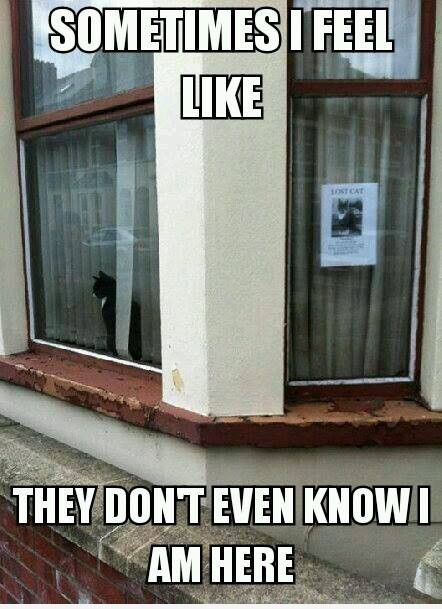 Lost cat poster on window... same cat in other window... Awww, poor kitty! I know how he feels.