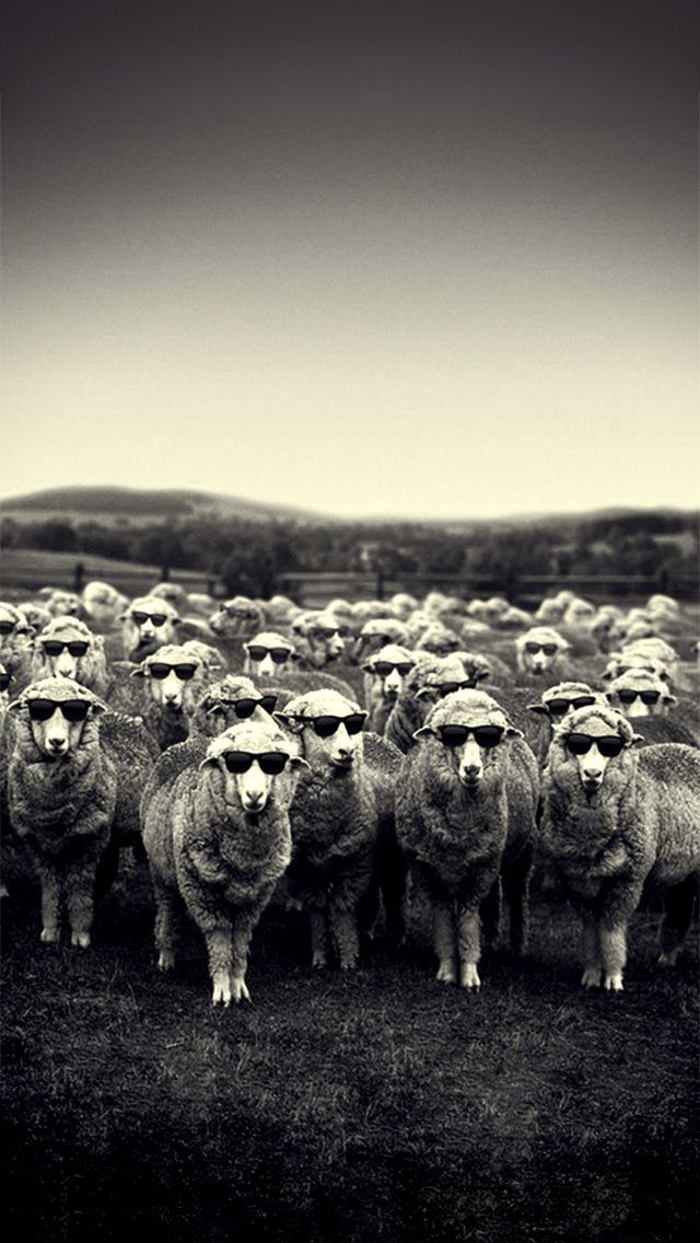 Not on I want to craft myself for my own self esteem but I would like to belong in certain group of people. In this picture, all the sheep are wearing a sunglasses therefore not wearing would not fit into their group.It's like being a black sheep in a group of white sheep. In some extent feeling neglected lowers self esteem.