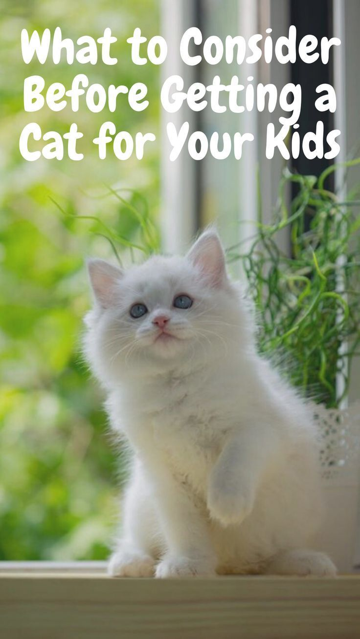What To Consider Before Getting A Cat For Your Kids In 2020 Cat Adoption Cats Funny Cats