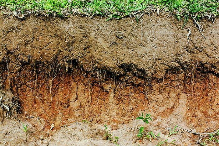 звезд слой почвы картинки название
