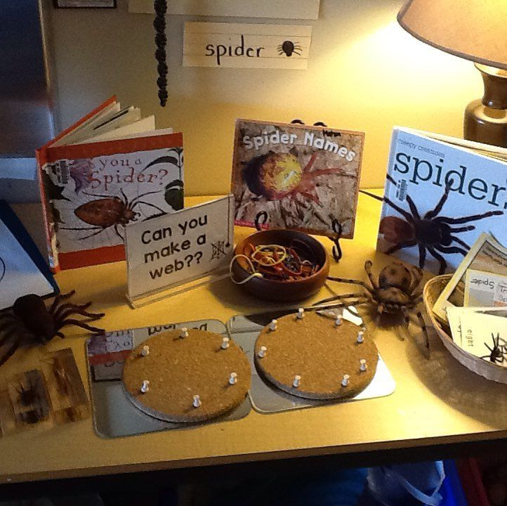 Set up a spider provocation. It's all about spiders in our class! #sd36learn #kindergarten
