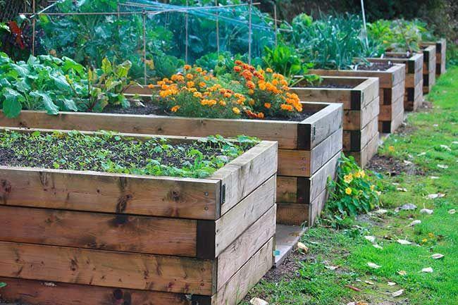Trädgårdskurs i att odla i pallkrage!