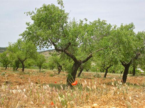 Almería, Andalucía - the home of the Indalo
