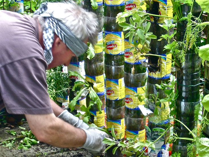 15 Best Plante Images On Pinterest Plants Bonsai And