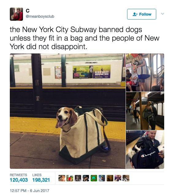 I KNOW THIS IS NOTHING NEW. I know this has been around for as long as Ina Garten's been wearing blousy button-downs (read: eternity), but these very large doggos in bags recently reminded everyone just how perfect the whole thing is. | 17 Pictures That Prove Dogs Are Just Meant To Be Carried, Not Walked