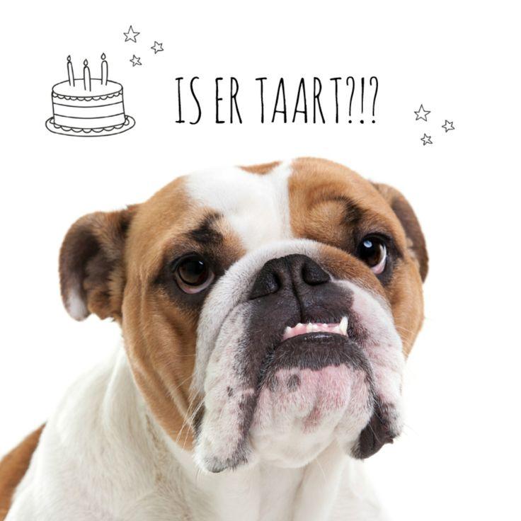 Lieve grappige Engelse Bull Dog die graag een stukje verjaardag taart lust!  De kaart is makkelijk aan te passen met een tekst naar wens.