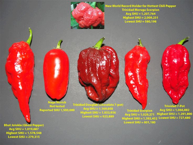 Watch out for the Trinidad Moruga Scorpion.  Hottest pepper in the world!