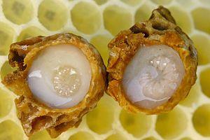 Η γεύση του βασιλικού πολτού είναι υπόξινη, ελαφρά καυστική και το χρώμα του υποκίτρινο-υπόλευκο.