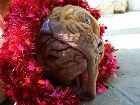 Karácsonyi vészhelyzet kutyáknál, az állatorvos tanácsai!