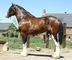 """Résultat de recherche d'images pour """"photos du plus grand cheval au monde"""""""