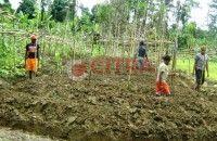 Suku Rumah Pohon Belajar Bercocok Tanam