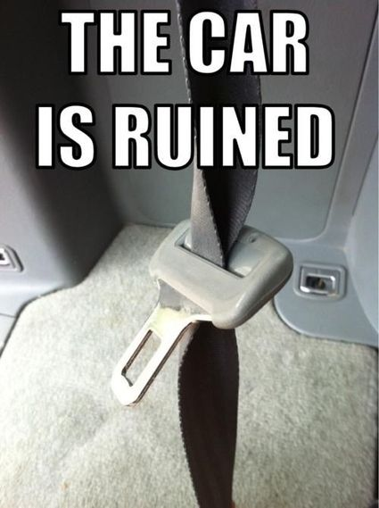 .: Giggle, Truth, Cars, Funny Stuff, So True, Humor, Funnies, Seatbelt