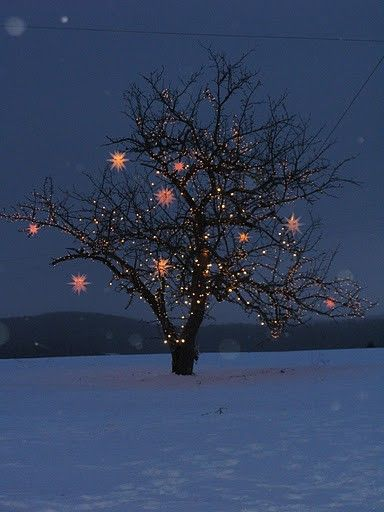 Thinking Outside The Boxwood: How to Wrap a Tree in Lights