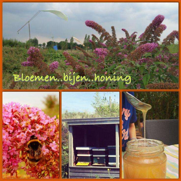 Honing van onze eigen Netl bijen